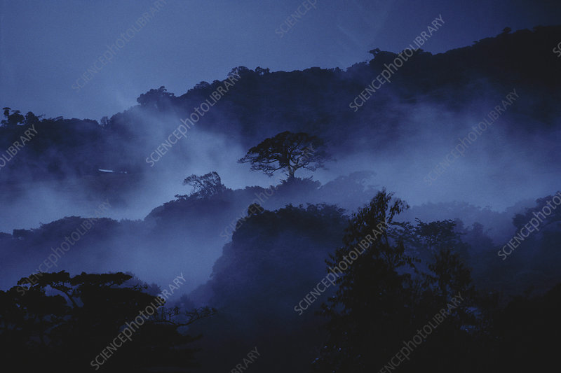 Misty Cloud Forest at Dusk