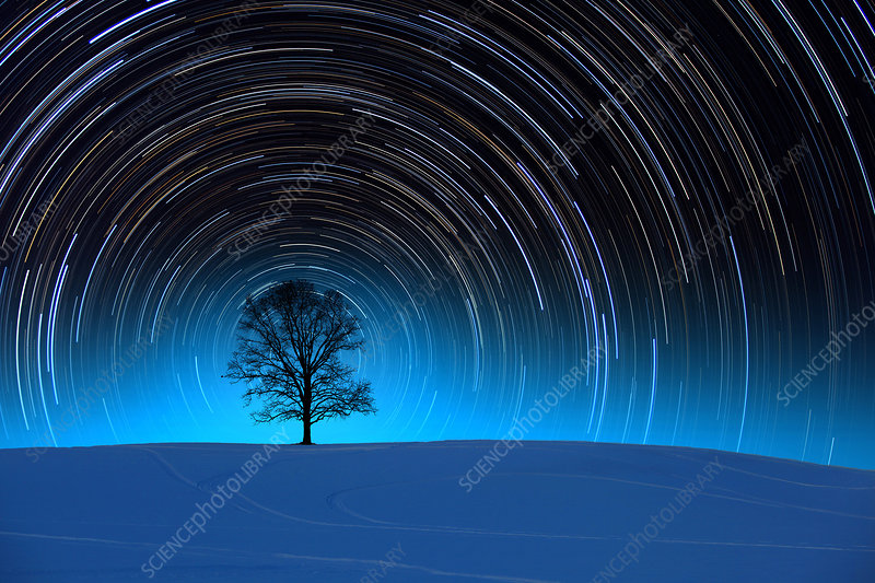 Tree With Star Trails
