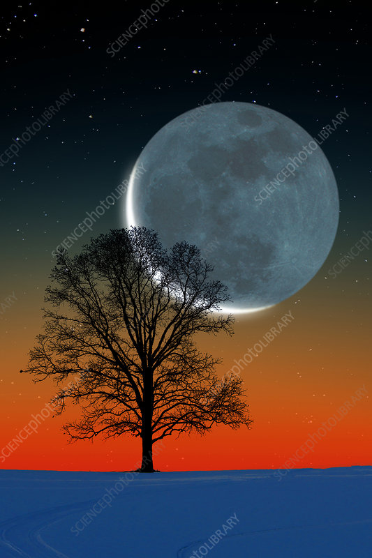 Crescent moon and tree