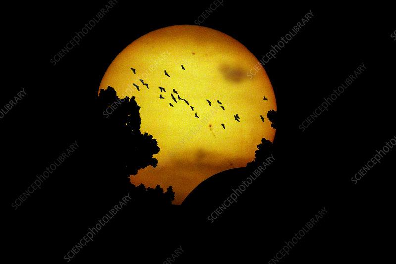Solar Eclipse on 05-20-2012