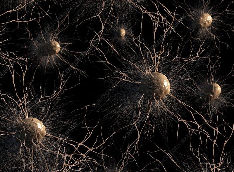 Astrocyte nerve cells, artwork