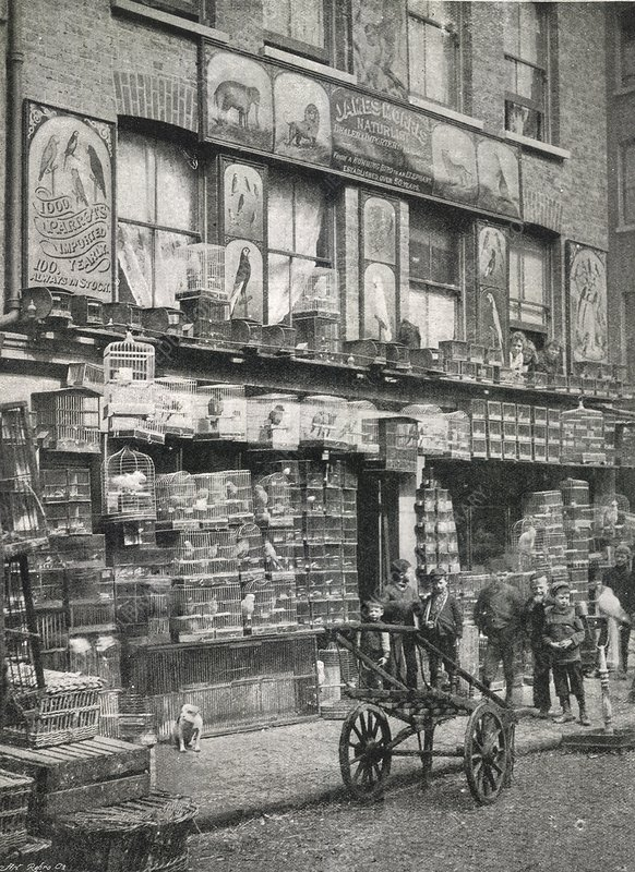 bird market  london  1890s - stock image c017  3664