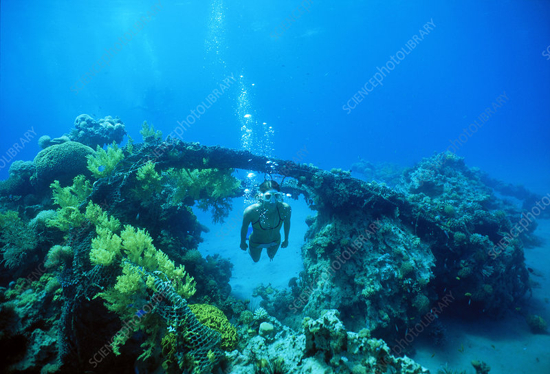 Free diver in artificial reef, Red Sea