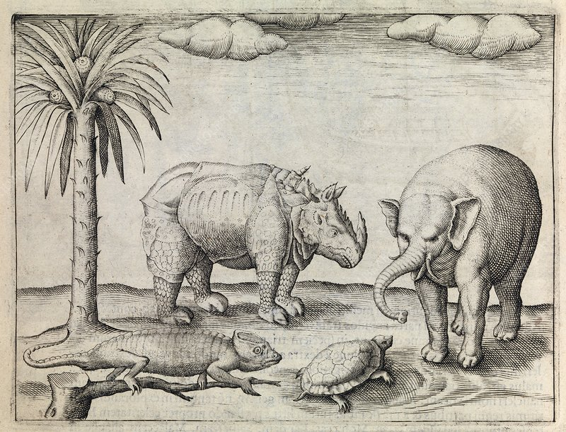 Animals of Java, 17th century