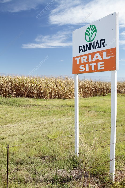 GM crops trial site, South Africa
