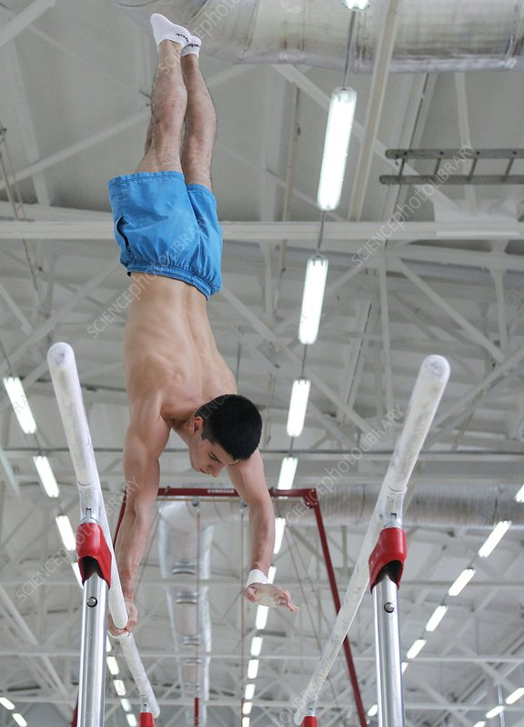 Gymnast on parallel bars - Stock Image - C017/8261 - Science