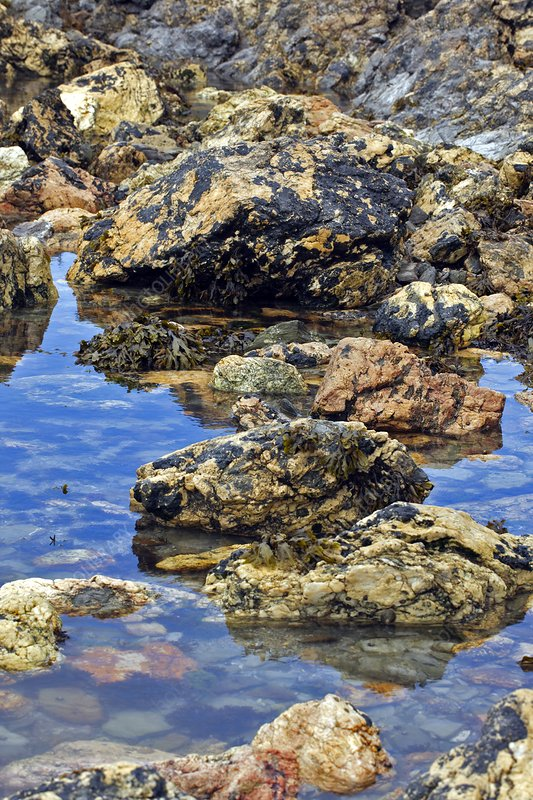 Coastal rock pools