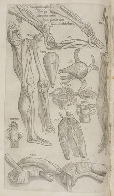 Leg and parts of the body