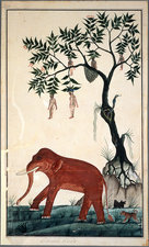 Lady fruits and elephant