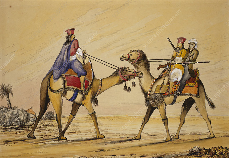 Two camels with Sindhi riders