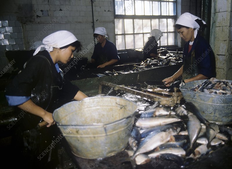 Fish canning factory