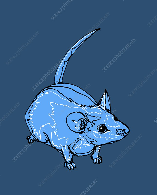 Mouse, illustration