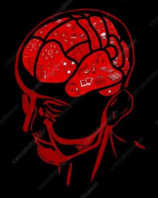 Brain areas, conceptual illustration