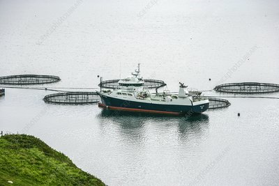 Salmon pens with well boat