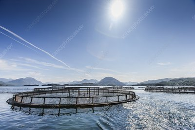 Scottish farmed salmon pens