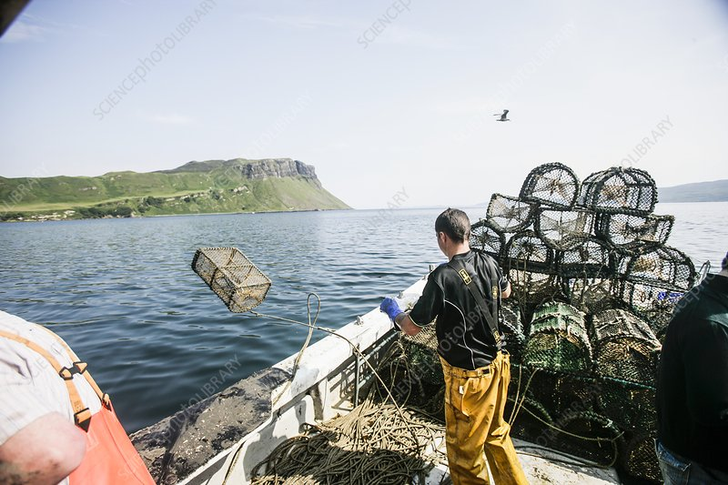 Fishing for Langoustines in scotland