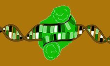Restriction enzyme and DNA, illustration