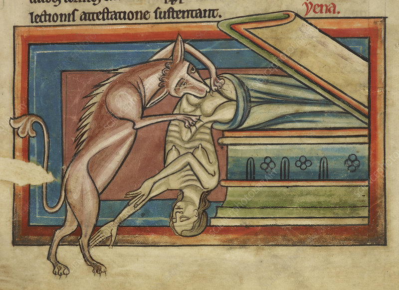Hyena robbing a tomb
