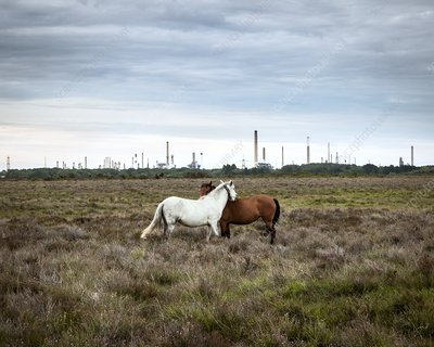 Horses and an oil refinery