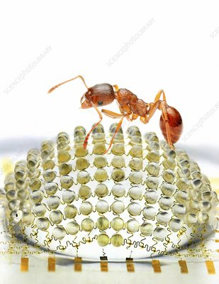 Electronic compound eye with ant
