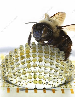 Electronic compound eye with bee, concept
