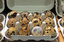 Fresh quail eggs in a box