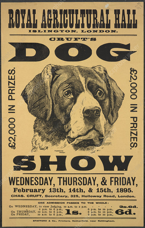 Cruft's dog show