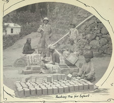 Packing tea for export
