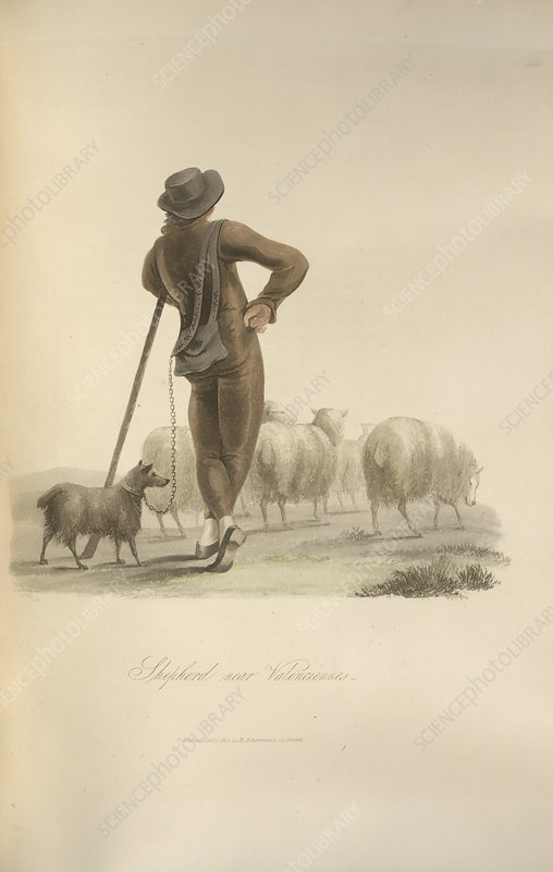 Shepherd near Valenciennes