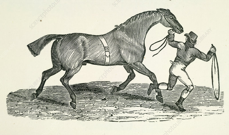 A man and horse
