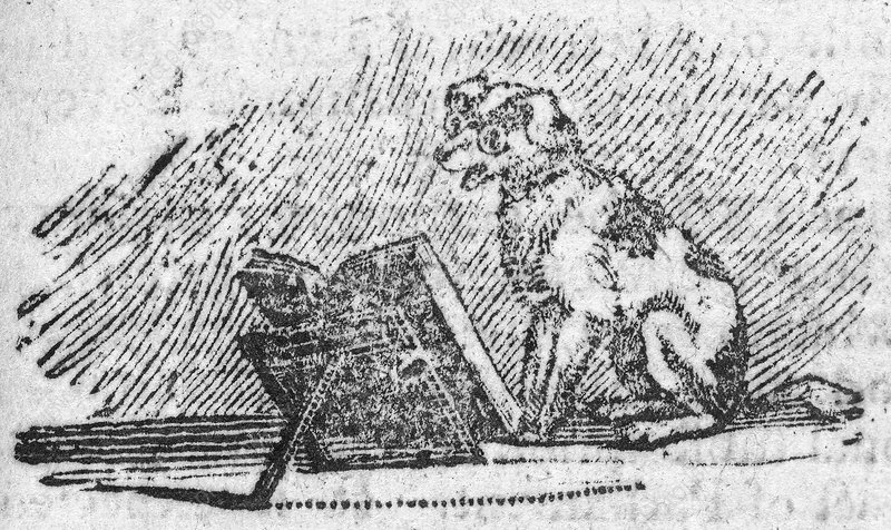 A dog reading