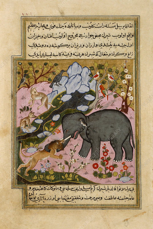 An elephant lured by various animals