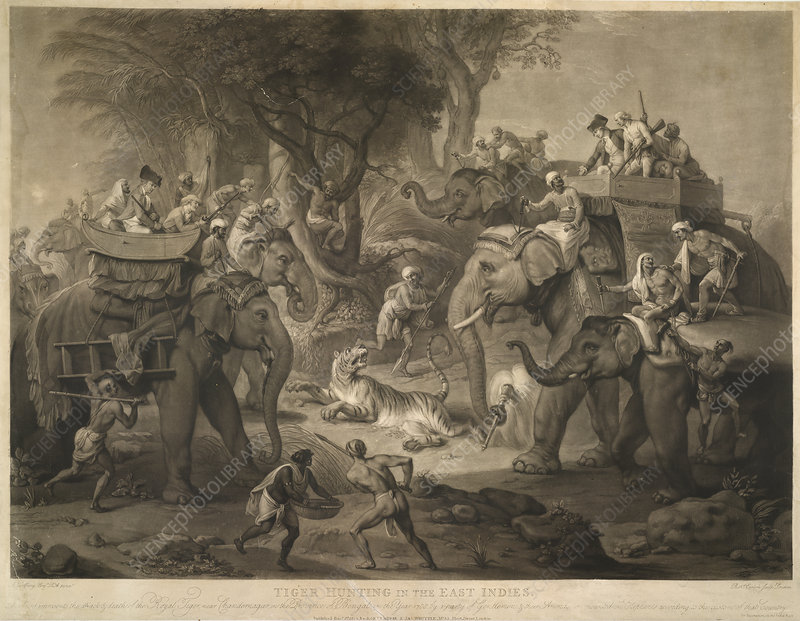 Tiger Hunting in the East Indies