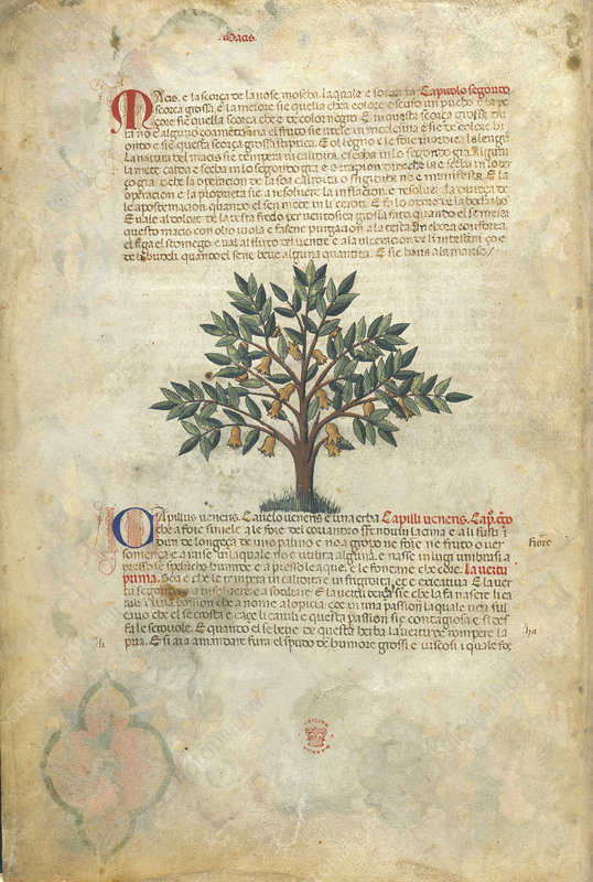 Italian version of the Treatise on Medica