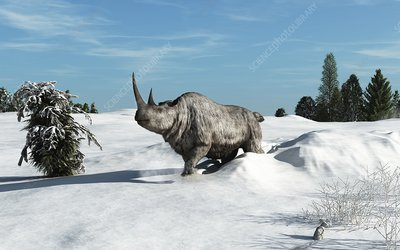 Woolly rhinoceros, artwork
