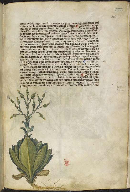 A herbal book of plants and remedies