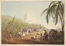 Slaves cutting the sugar cane
