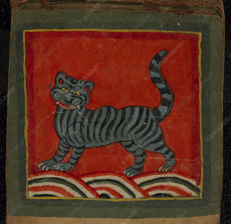 Painting of a member of the cat family