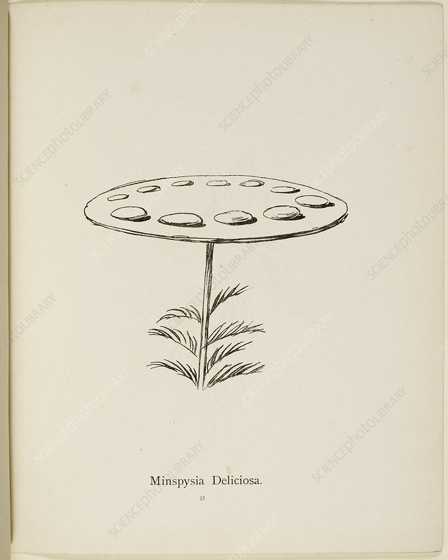 Nonsense Botany by Edward Lear