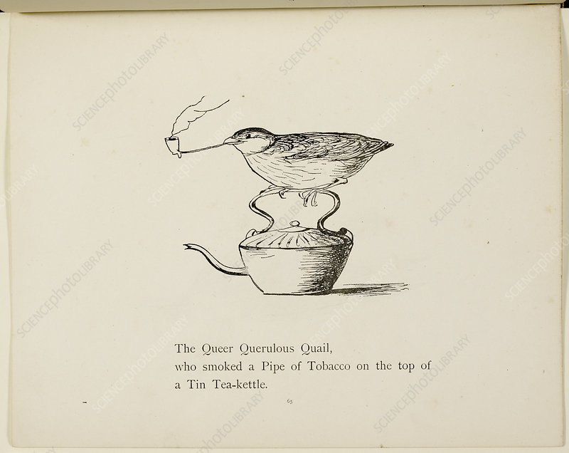 Quail perched on teapot