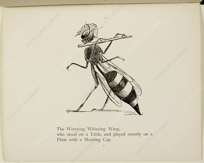 Wasp playing the flute