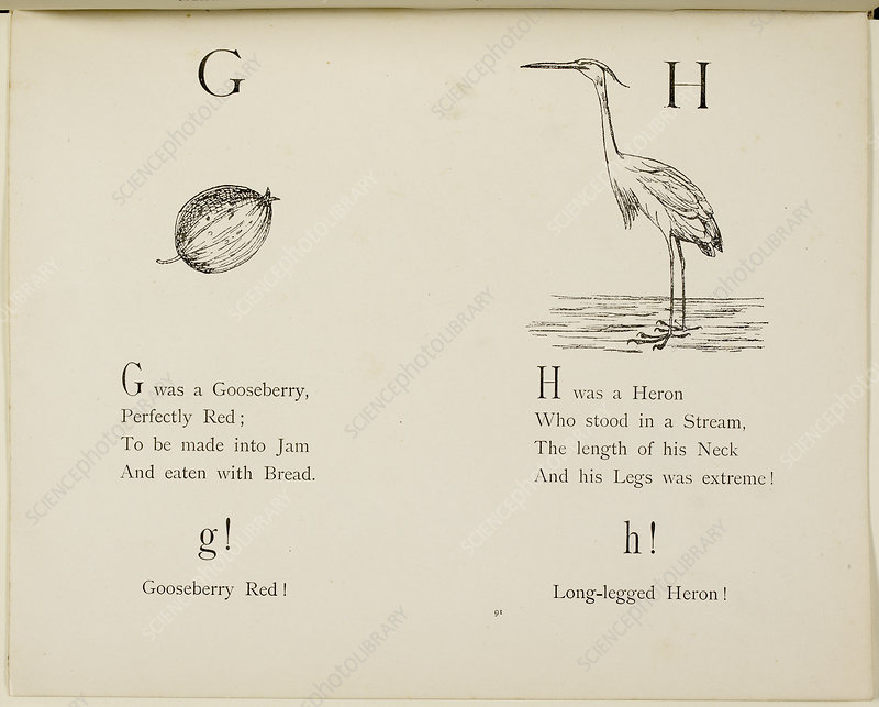 Gooseberry and heron