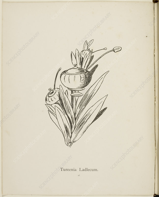 Nonsense Botany collection by Edward Lear