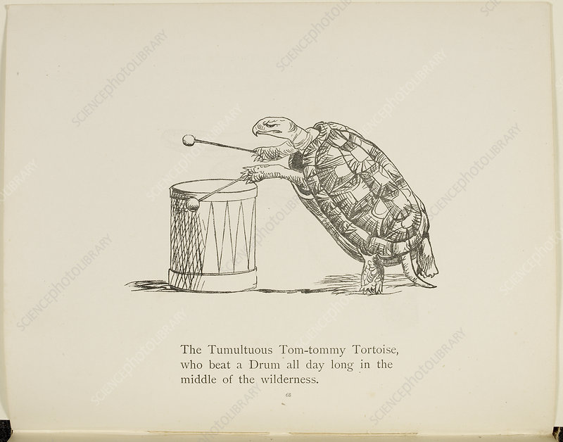 Tortoise playing a drum