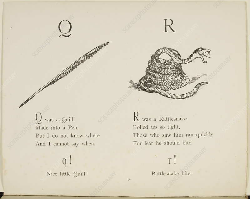Quill and rattlesnake