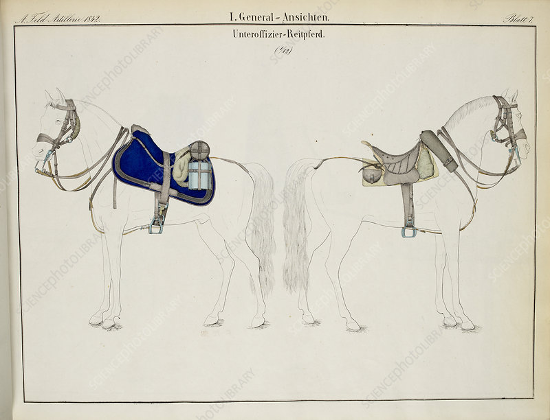 Cavalry saddles and bridles