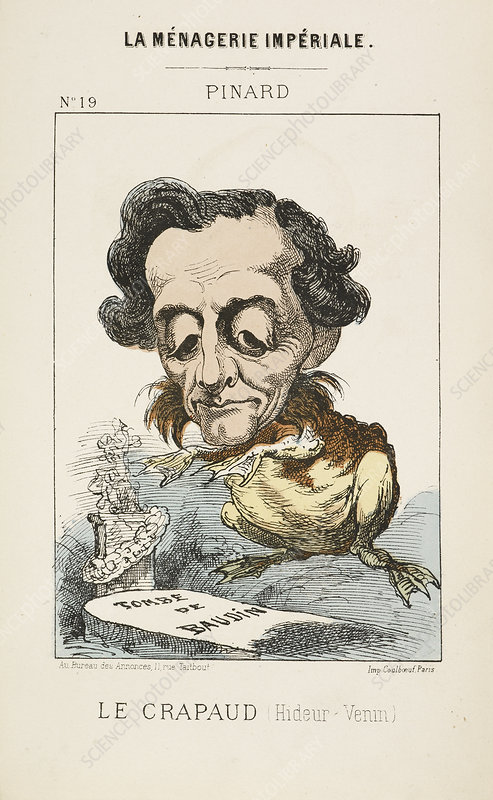 French Caricature - Le Crapaud