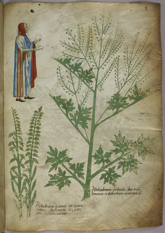 Illustration of plants and human