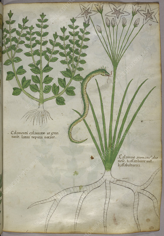 Illustration of plants, and a snake