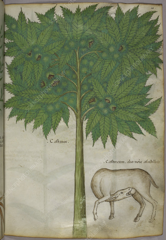 Illustration of a tree and an animal